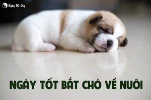 Hướng dẫn xem ngày tốt bắt chó về nuôi?